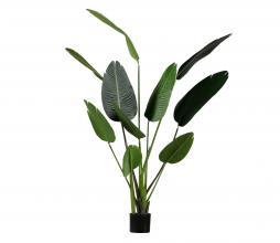 Afbeelding van product: WOOOD Strelitzia kunstplant groen, div afmetingen H 164 x B 96 x D 63 cm