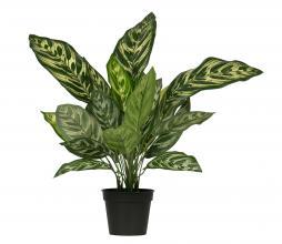 Afbeelding van product: WOOOD Aglaonema kunstplant 40 cm groen