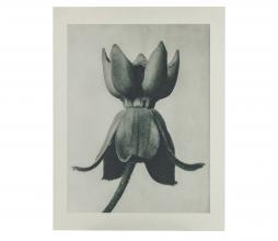 Afbeelding van product: BePureHome Artwork plantstudie 81 karton grijs/beige