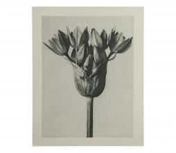 Afbeelding van product: BePureHome Artwork plantstudie 94 karton grijs/beige