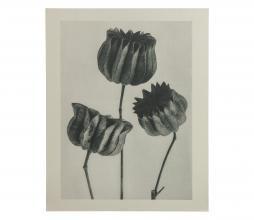 Afbeelding van product: BePureHome Artwork plantstudie 103 karton grijs/beige
