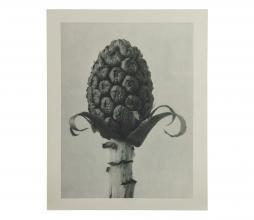 Afbeelding van product: BePureHome Artwork plantstudie 60 karton grijs/beige