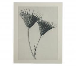 Afbeelding van product: BePureHome Artwork plantstudie 102 karton grijs/beige