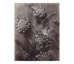 Afbeelding van product: BePureHome Artwork bloemstudie 21 karton grijs/beige