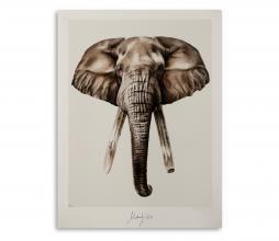 Afbeelding van product: Selected by Bond Elephant kunstposter 40x50 cm